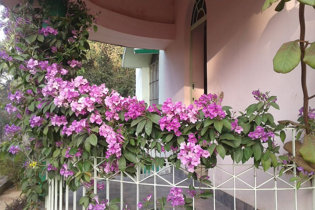 Balcony with full bloom