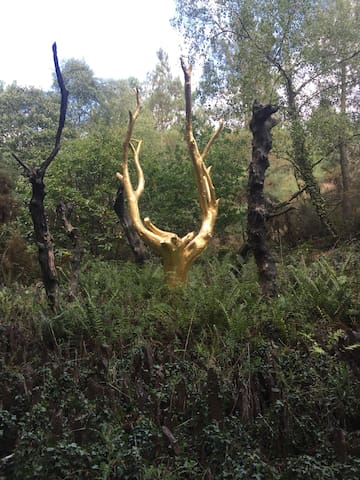 L'arbre d'or, forêt de Brocéliande