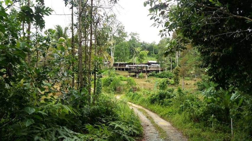 BAMBOO GUESTHOUSE - drmind farm
