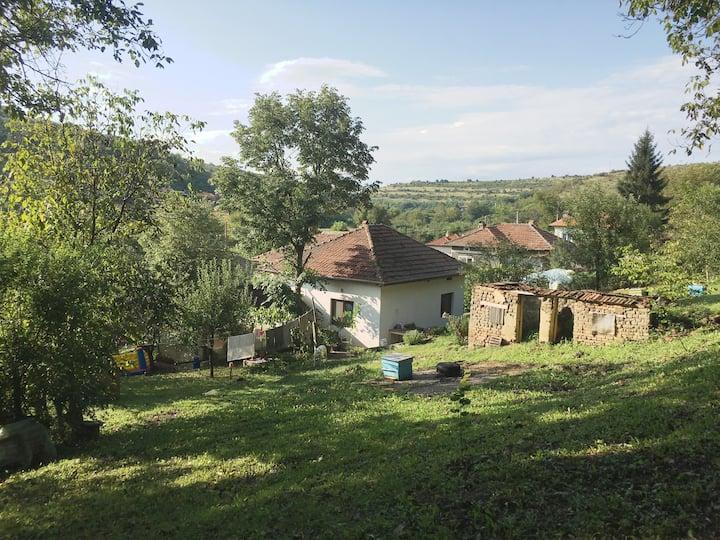 House near Danube River