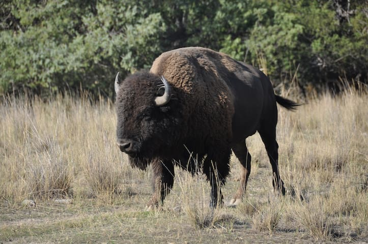 National Bison Range, 85 scenic miles south of us