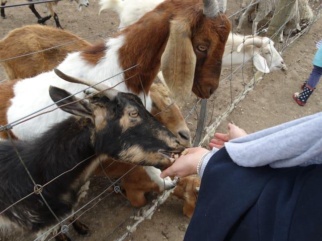 Ripples n Tonic Farm Stay - Plover - Ventnor - Villa