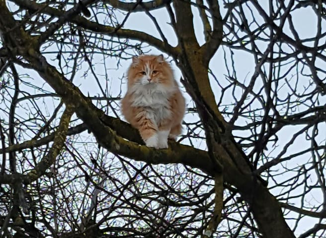 Owl or cat? :-)