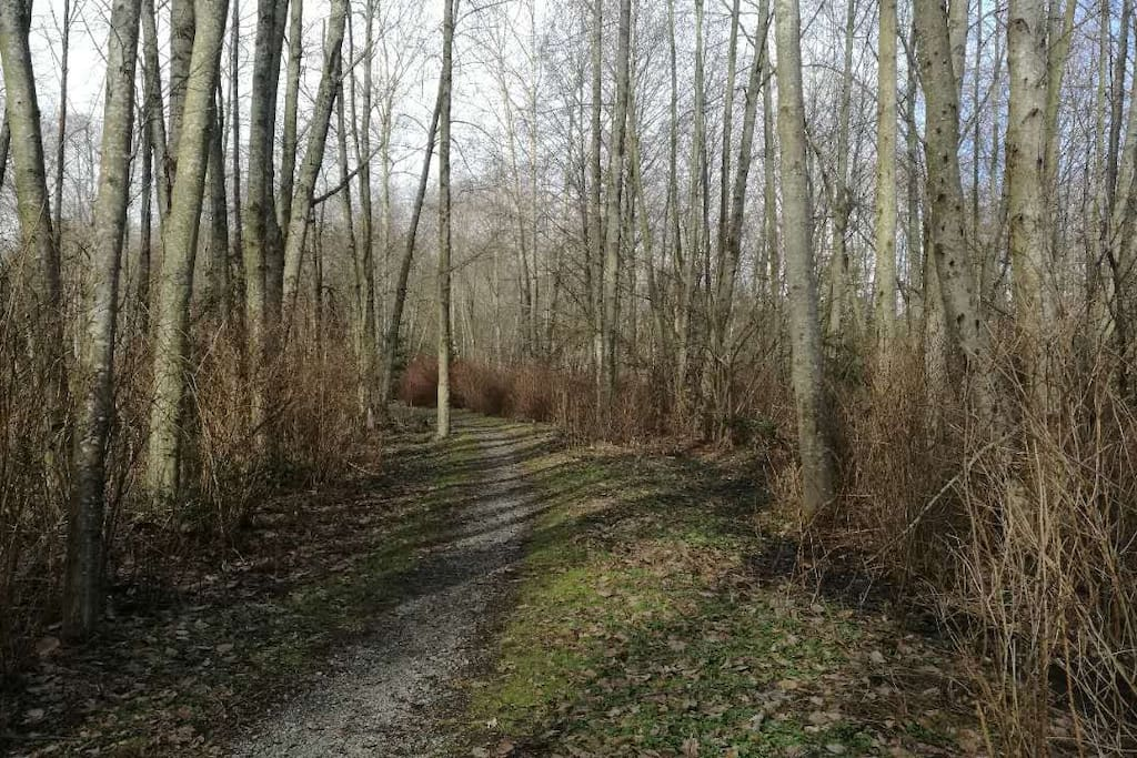 Semiahmoo Trail