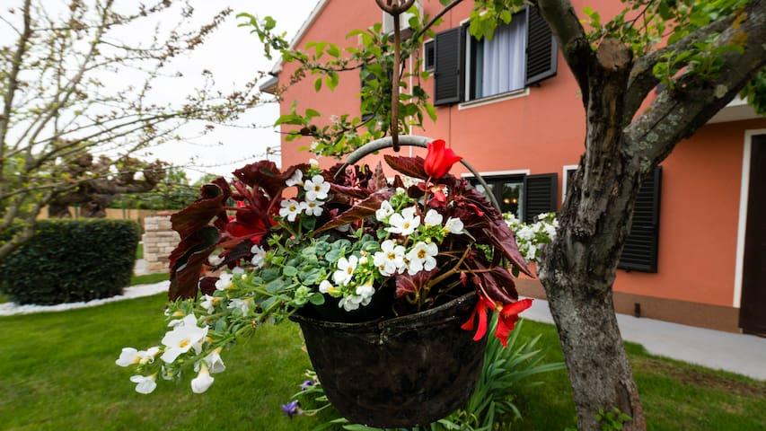 Villa Roža Barboj