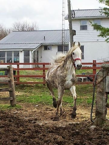 Accomodation on horse farm in house  Smoking  home - Kawartha Lakes - Dormitório