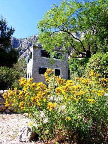 "Old Dalmatian House ""IVAN"""
