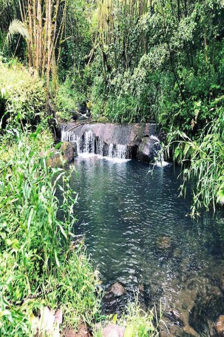 Inner sanctum of the Jungle