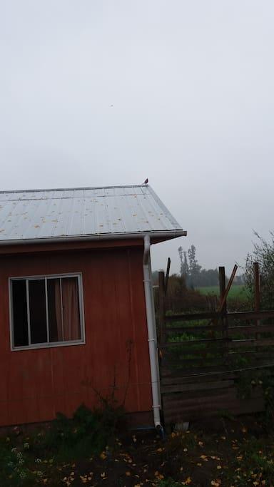 Donde los pájaros lo despiertan con sus trinos.