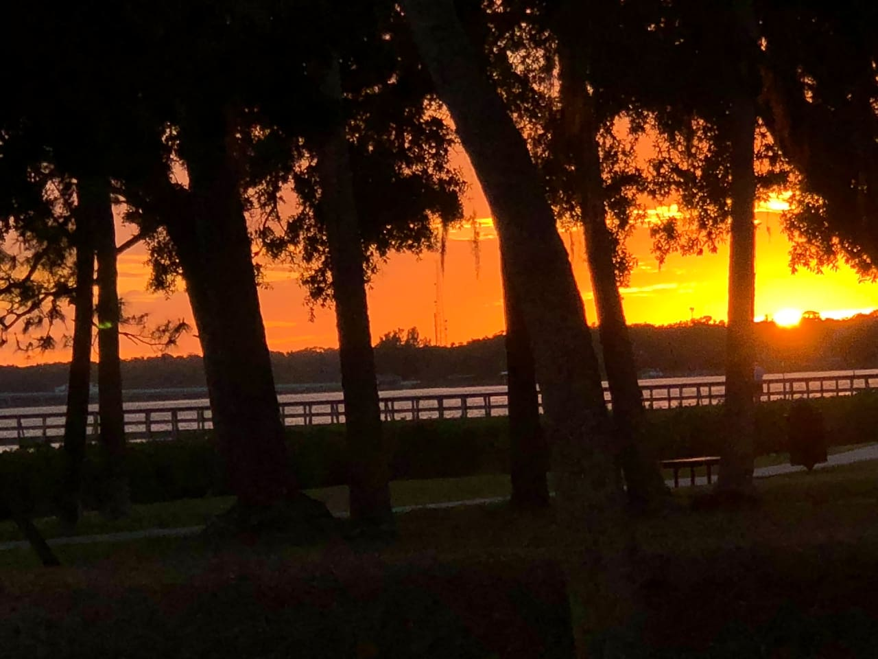 Stay a short walk away from Tampa Bay