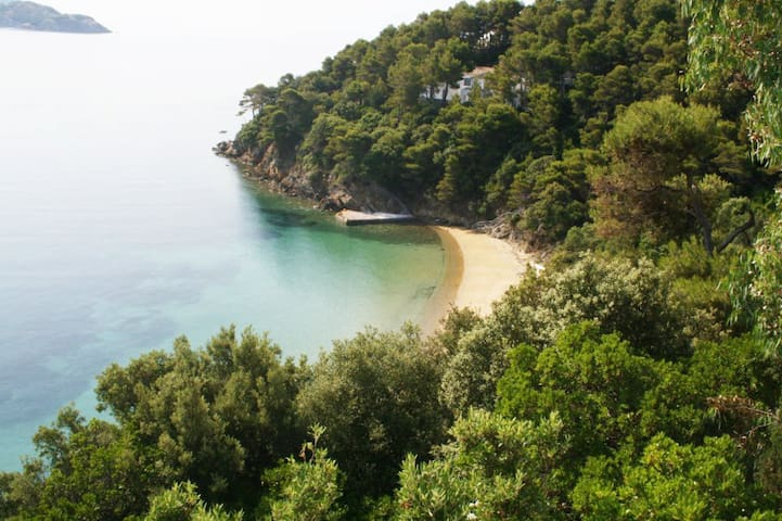 View of our private beach surrounded by pine forest.
