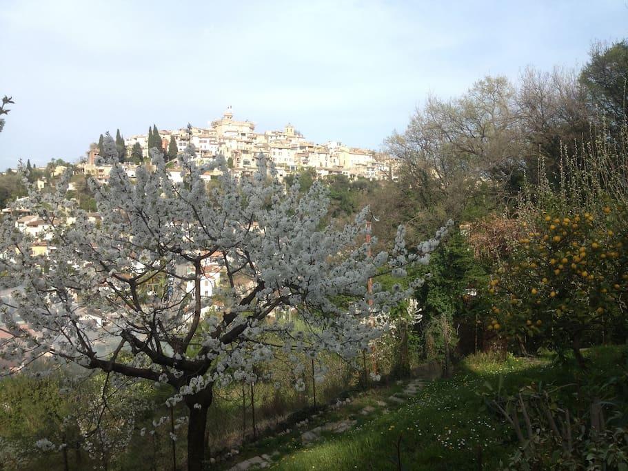 Le jardin au printemps avec les cerisiers en Fleurs sur fond de chateau