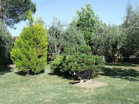 Casa Daisy, relax tra Cortona e la Valdichiana