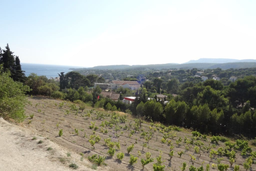 Vue sur les vignes, la mer depuis le haut vent