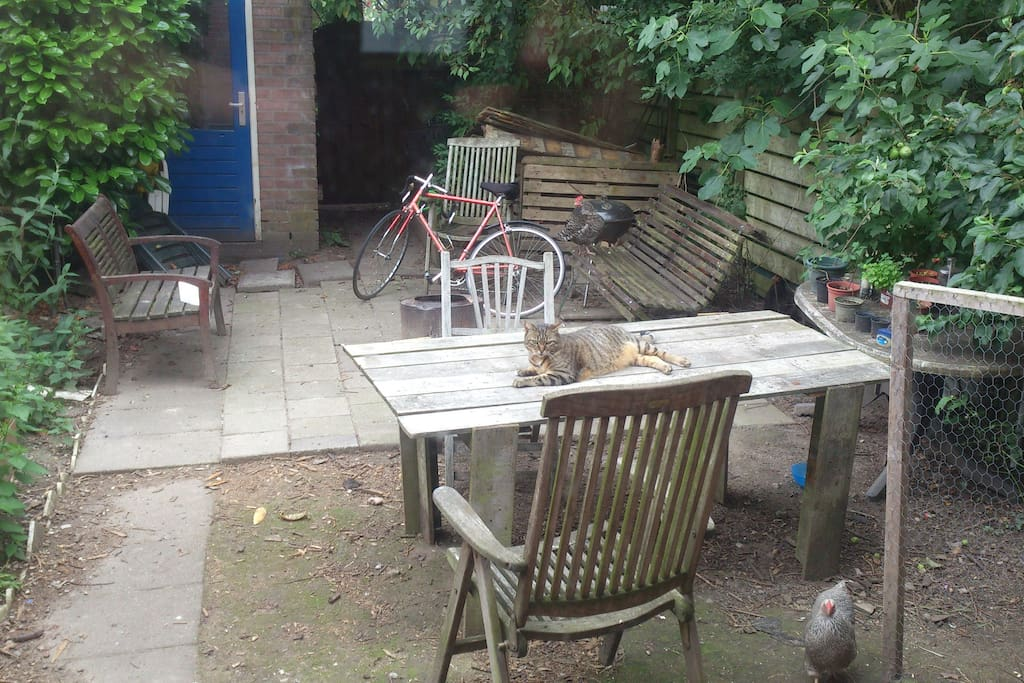 Our garden with three funny chickens