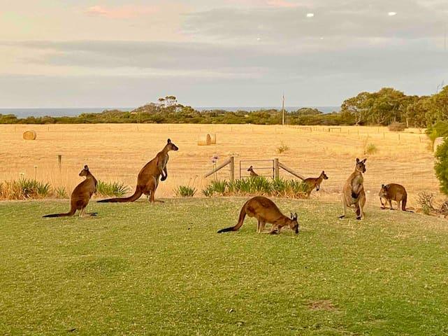 Bee's Place-Emu Bay (sleeps 9 on 10 acres of land)
