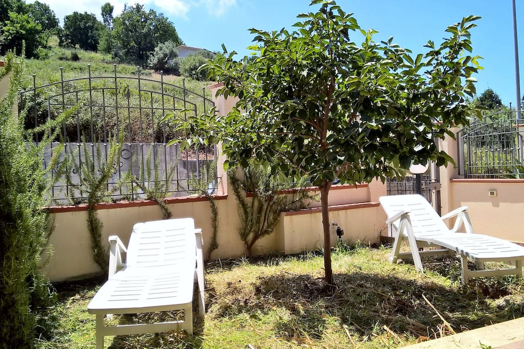 Lotus tree and fence rosemary