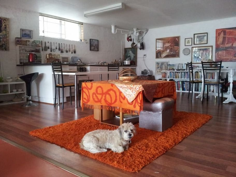 Open plan kitchen/living room with doggy