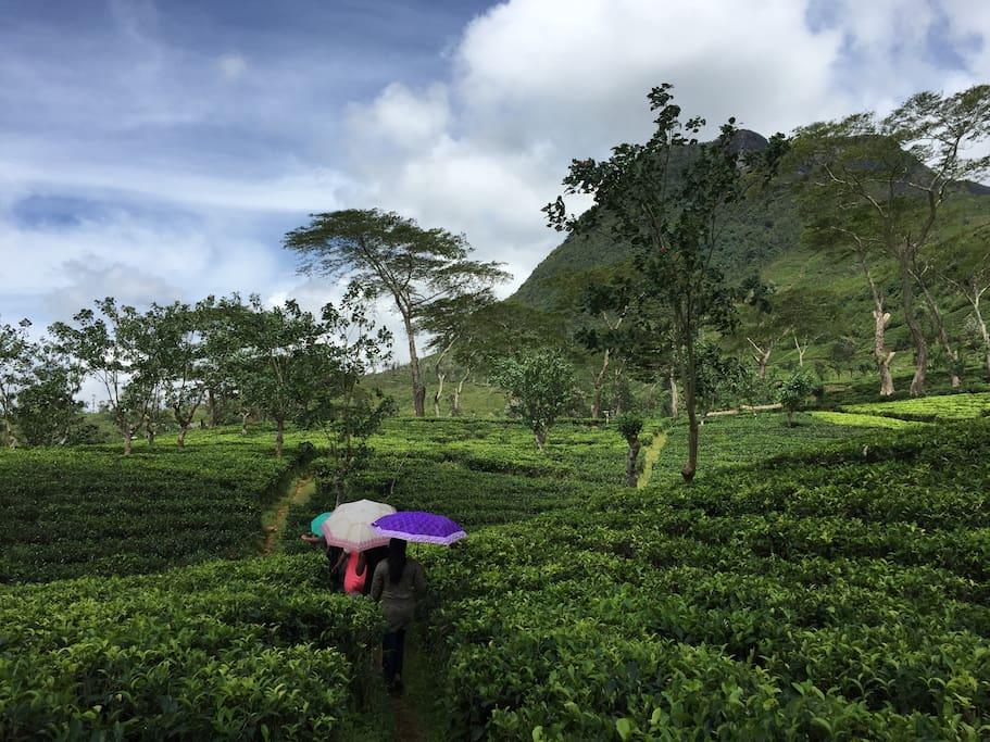 Nestled among Sri Lanka's tea country
