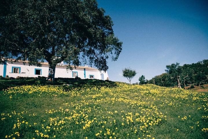 Monte Aroeira | Country House at Alentejo Coast 6