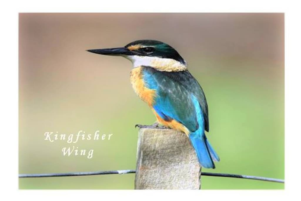The Kingfisher Wing
