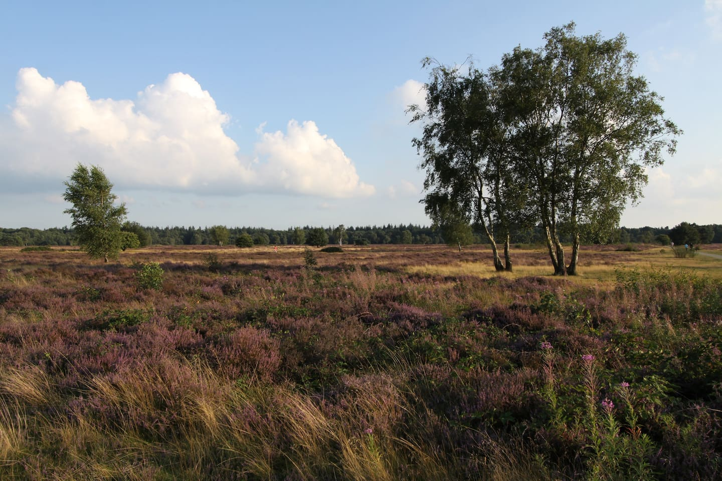 heathlands at 800m.