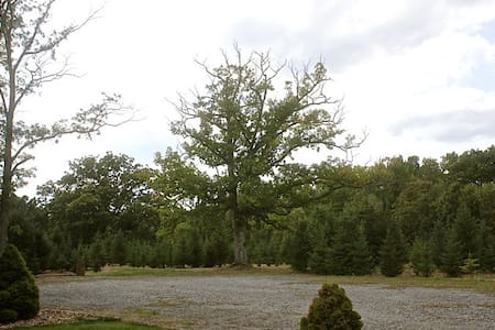 Stone Oak Tree Farm White Spruce Rm - Slate Hill - Inap sarapan