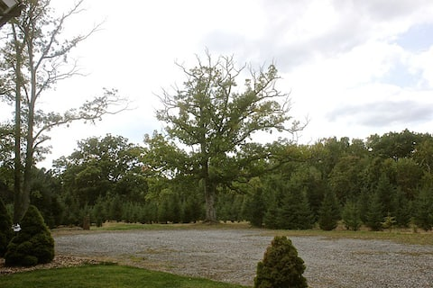 Stone Oak Tree Farm White Spruce Rm