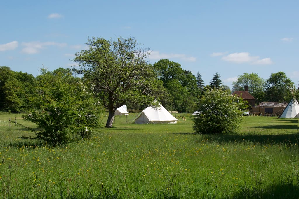 Gooseberry Field Campsite Bell Tent Tents For Rent In