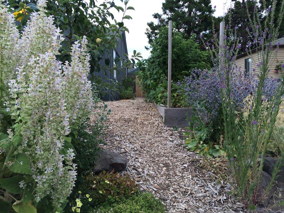 Garden lined entrance off street