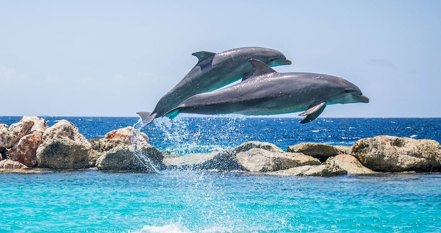Watch the dolphins from the comfort of your beachfront private balcony.