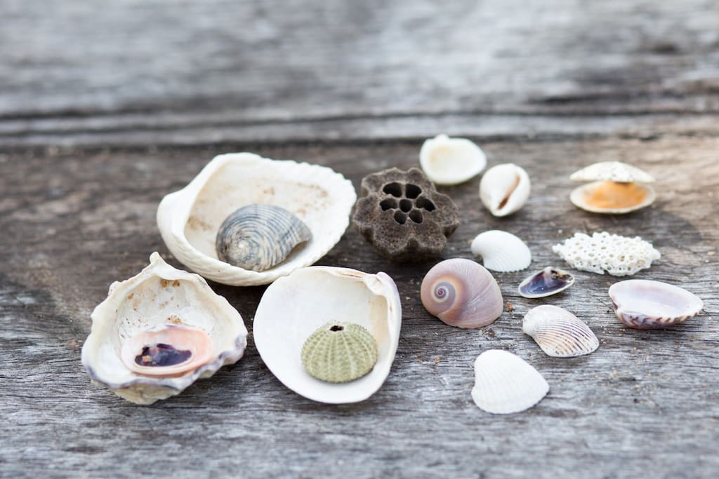 Treasures collected from the beach