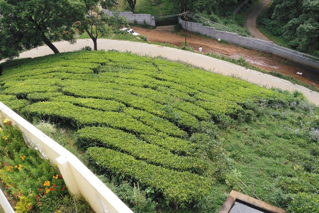 Tea Garden nearby