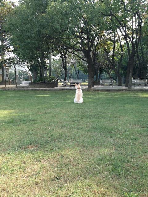 Soulangh Cultural Park Tainan host