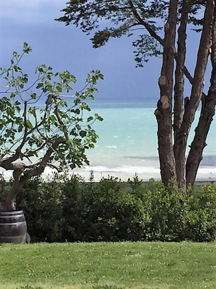 La vista dal giardino... il mare mosso , un fico e tanto verde tutt'intorno!!