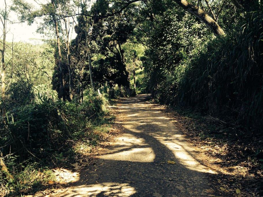Walking Trail at Mowbrey House