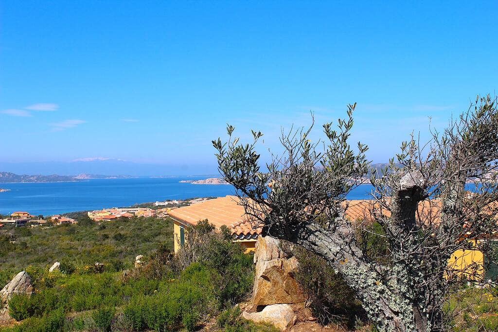 Maddalena Island and Corsica Sight from the garden