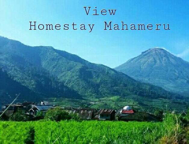 homestay mahameru