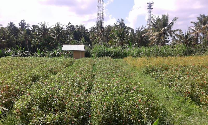 Mambal Natural House - Abiansemal - Vila