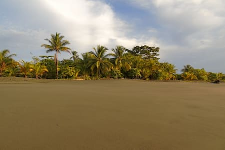Plage et jungle à Puerto Jimenez