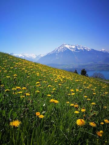 Splendid Swiss Alps&Lake View B&B Triple Room  3