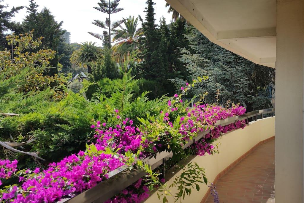 De belles fleurs pour vous accueillir : bougainvilliers et verdure tout autour. La porte d'entrée du studio est en face des fleurs, sur la coursive.