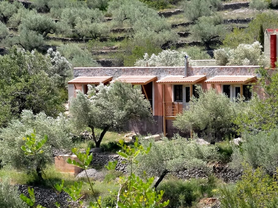 Frontview impression with olive trees