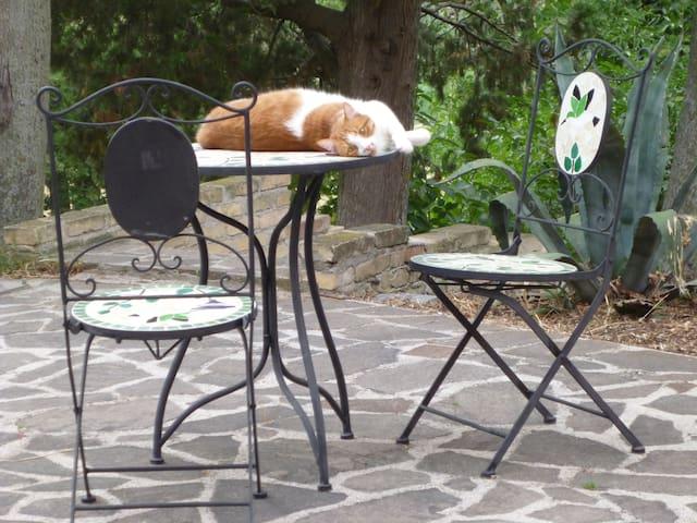 Il nostro tigrotto di Cà Giovanni, Sic gatto dolcissimo.