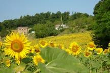 E' un piacere lungo la strada volgere lo sguardo e trovarsi circondati da campi illuminati di giallo!