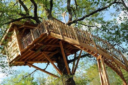 La Cabane du Vieux Chêne  Navarrenx - Susmiou - Cabana en un arbre