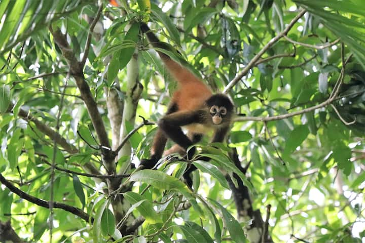 Four Monkeys  Eco Lodge Jungle & Beach - Spider