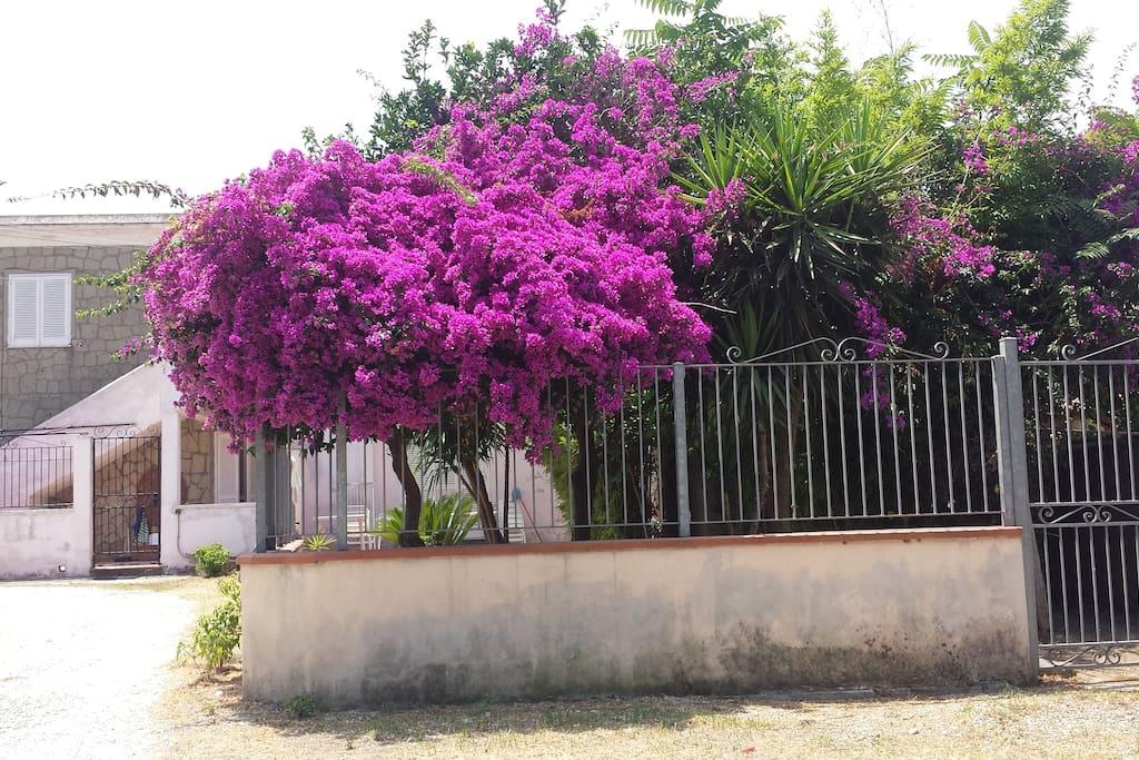 vista del giardino dall'esterno