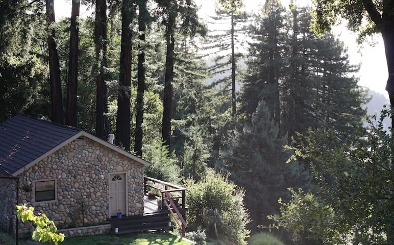 Santa Cruz Mtns. Dragonfly Cottage