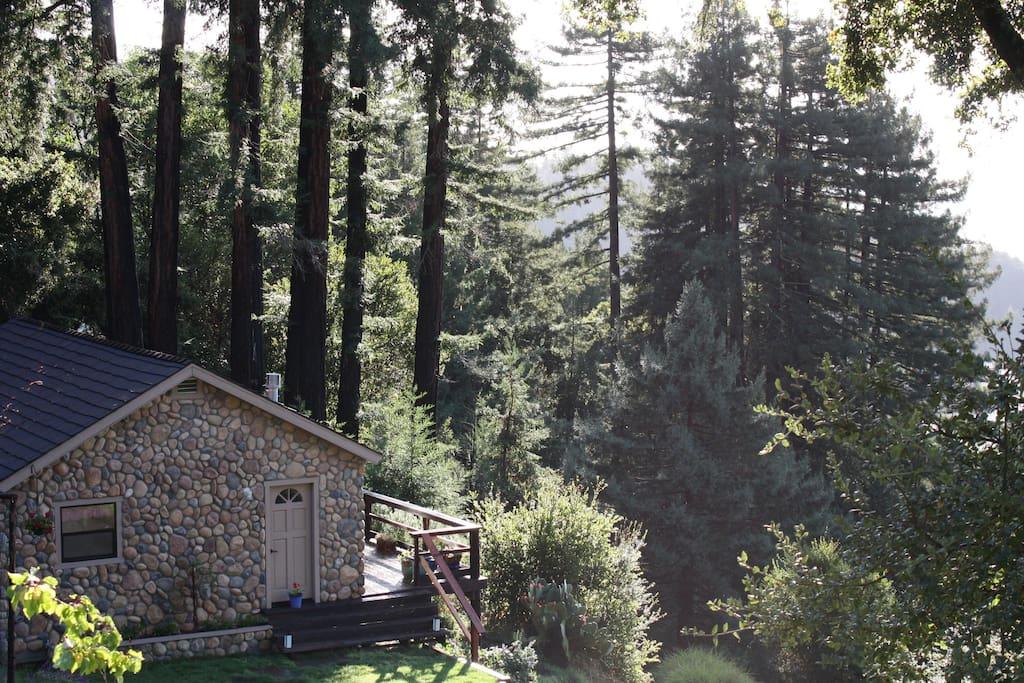 Santa Cruz Mtns Dragonfly Cottage Cabins For Rent In